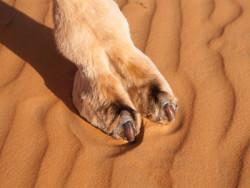 Of Camel Toe and Vulva Shaming